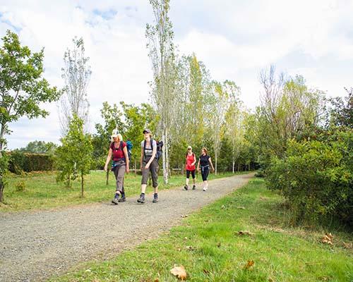 Camino Frances Tour guiado Galiwonders