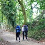 El Camino Francés Galiwonders