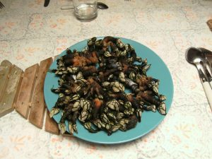 Galician percebes Galiwonders