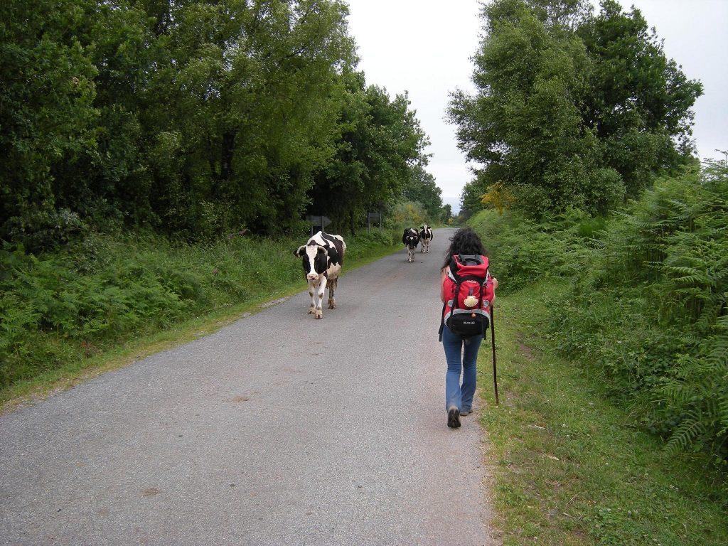 Camino Primitivo Galiwonders Lugo
