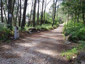 Camino Portuguese Bosque