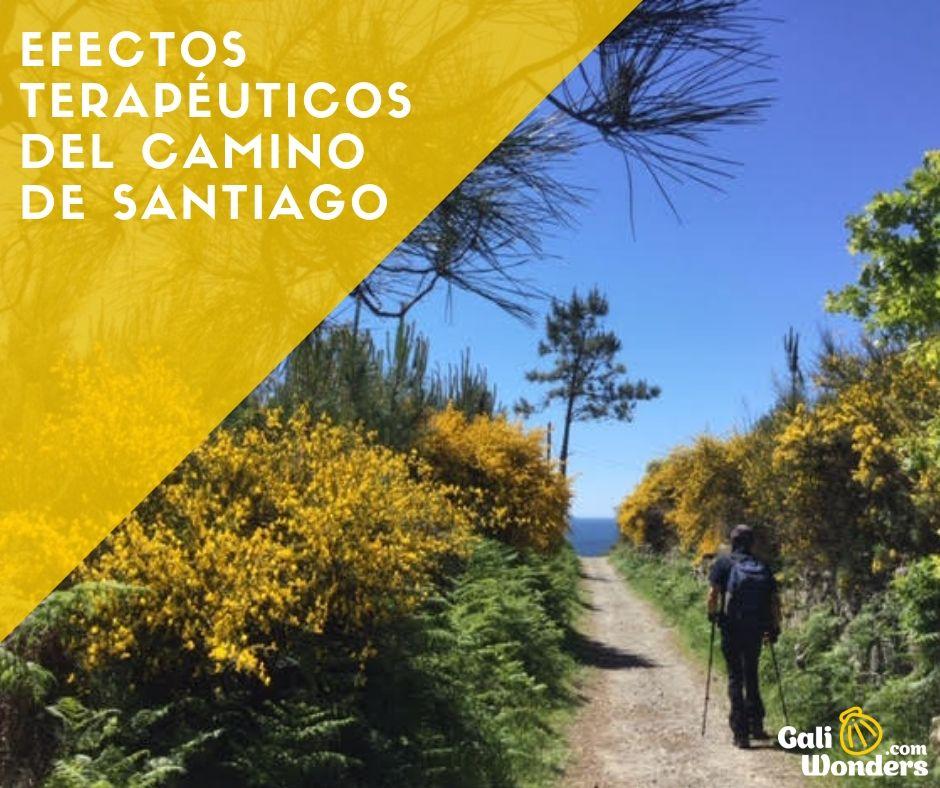 Efectos terapéuticos del Camino de Santiago