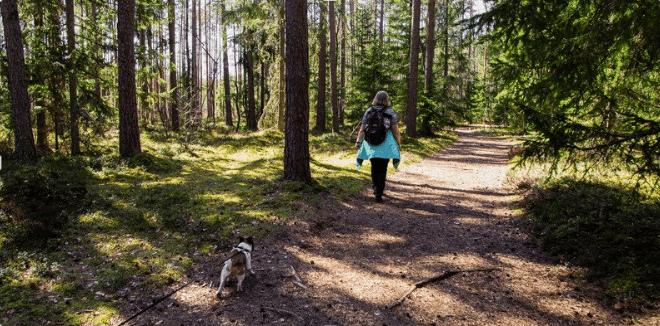 El Camino de Santiago con perro galiwonders