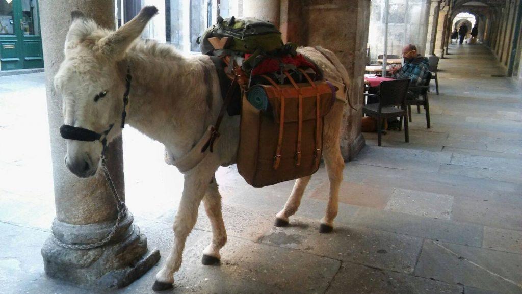donkey camino santiago