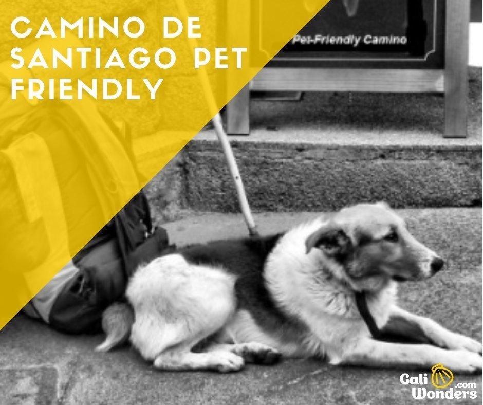 cammino di santiago con cane