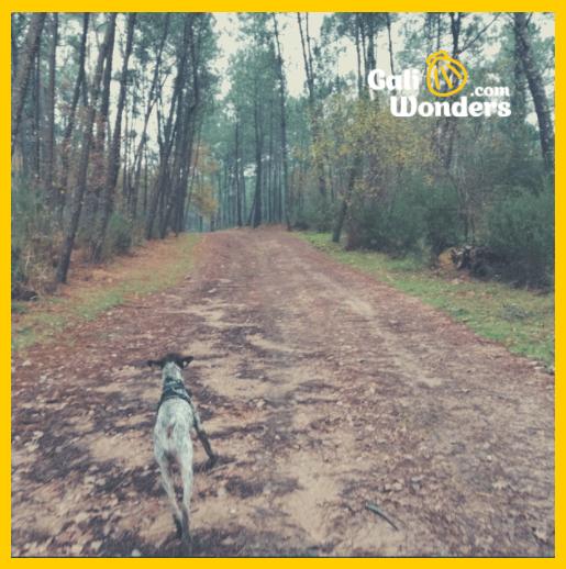 Camino Portugues con perro