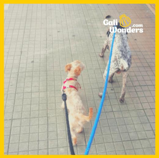 El Camino de Santiago con perro