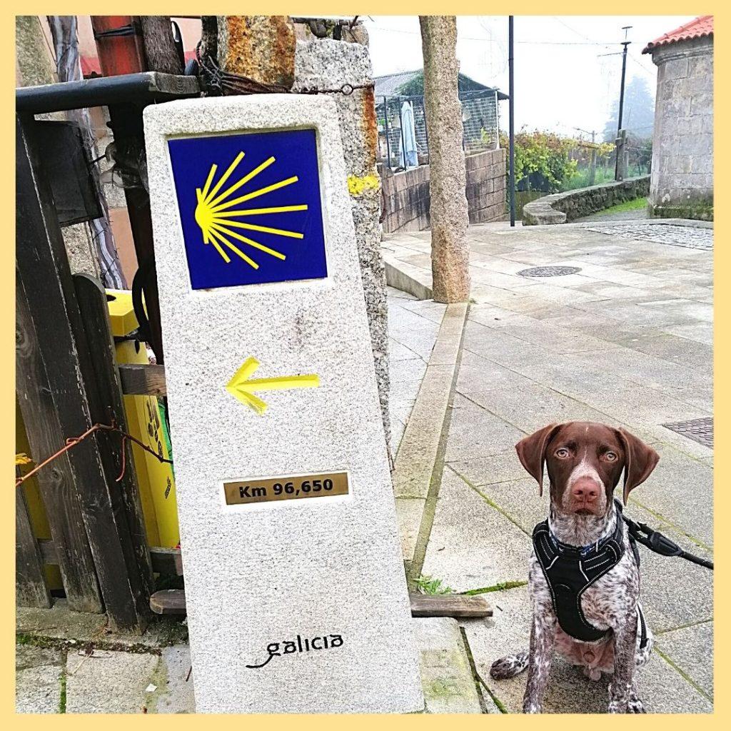 cammino organizzato con cane galiwonders