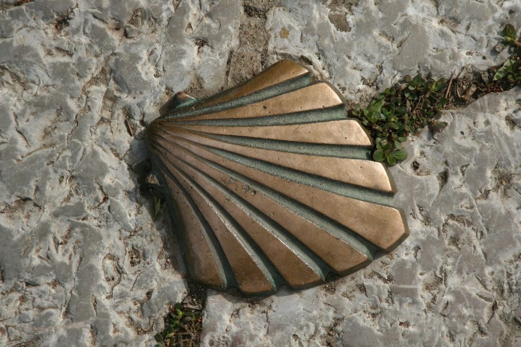 the scallop shell on the way galiwonders