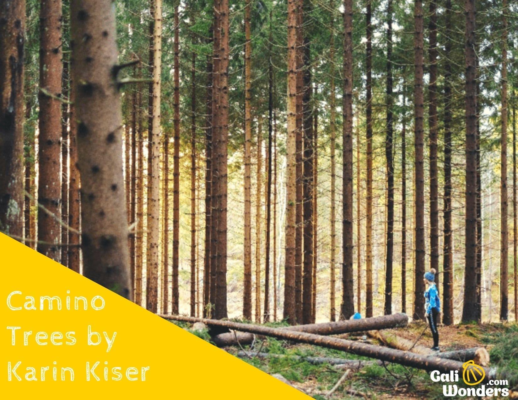 Camino trees galiwonders