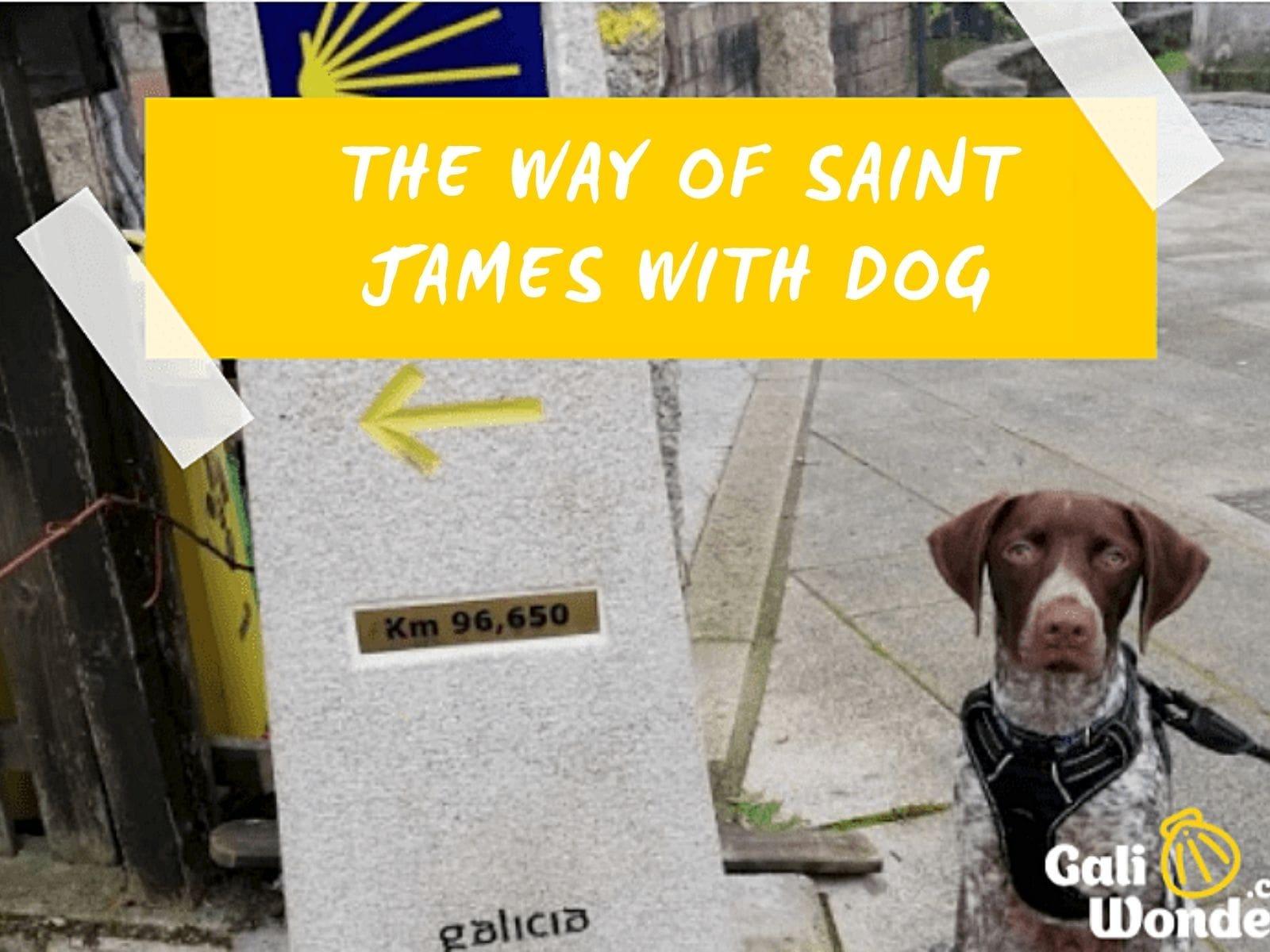 Walk the Camino de Santiago with a dog